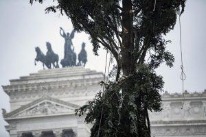 """Roma, arriva il nuovo """"Spelacchio"""": l'albero ha qualche ramo spezzato 7"""