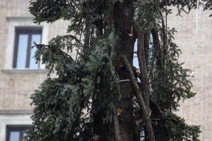 """Roma, arriva il nuovo """"Spelacchio"""": l'albero ha qualche ramo spezzato 8"""