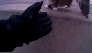 gatto salvato austostrada