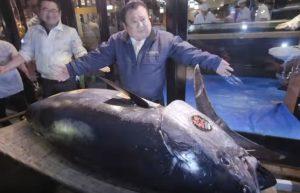 Giappone, tonno da record all'asta: venduto per 3.1 milioni di dollari