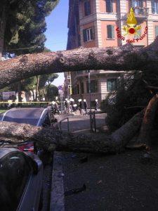 Roma, pino crolla vicino al liceo Giulio Cesare: due auto schiacciate