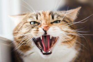 Gatti sovrappeso, malati o aggressivi? Può essere colpa del carattere del padrone