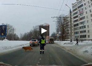 Russia, poliziotto ferma il traffico per far attraversare un cane zoppo VIDEO
