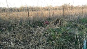 Tor di Valle, area sotto sequestro per rifiuti sparsi6