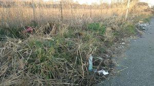 Tor di Valle, area sotto sequestro per rifiuti sparsi17