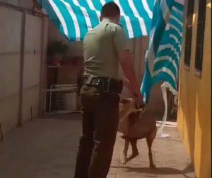 cile cane incastrato