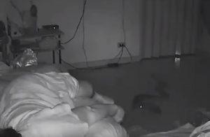 Pensionata morsa da un pitone mentre sta dormendo in casa VIDEO