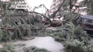 Maltempo Venezia, a Spinea due alberi cadono su otto macchine: nessun ferito