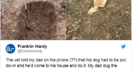 Cane malato assiste al padrone che gli scava la fossa