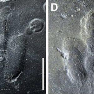 Impronte di dinosauro mai viste in Corea del Sud: tracce di pelle01