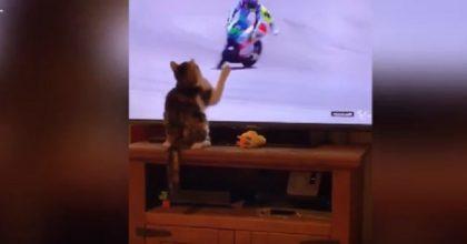gatto tocca schermo tv