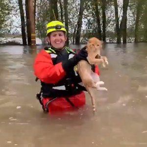 gatto salvato pompieri