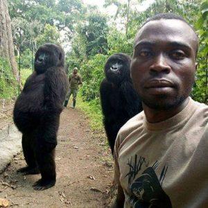 Gorilla in posa per un selfie: la FOTO è diventata virale