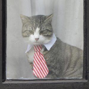 Julian Assange, che fine ha fatto il gatto James? Ecco dove l'hanno portato