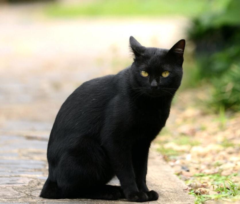 Cherokee nero micio