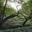 FuoriSalone, The Circular Garden: l'installazione diffusa per Eni all'Orto Botanico di Brera 3