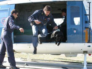 cane poliziotto gino