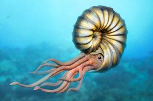 Fossile di ammonite racchiuso nell'ambra: risale al periodo del Cretaceo