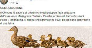 """Pomigliano d'Arco, l'autopsia sull'anatra fa ridere il web: """"Uccisa da faina"""". """"E' stata legittima difesa?"""""""