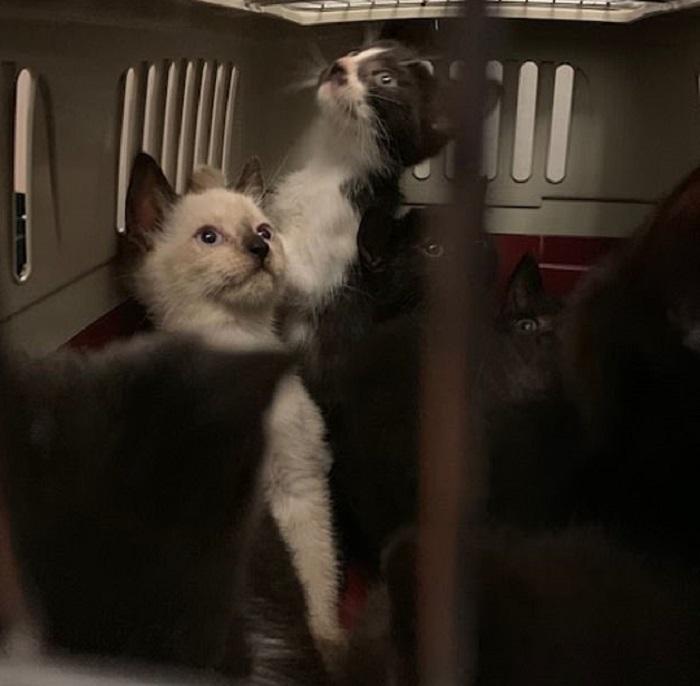 Toronto, 300 gatti trovati in un appartamento3