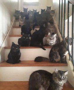 Toronto, 300 gatti trovati in un appartamento4
