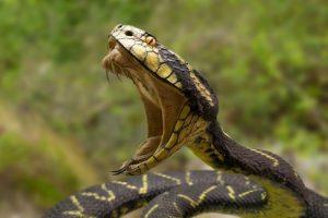Serpenti mordono 5,4 milioni di persone ogni anno nel mondo. E avvelenano quasi la metà