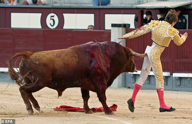 madrid torero incornato
