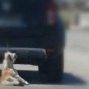 trani cane legato
