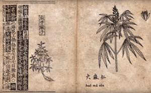 Canne, le prime in Cina 2500 anni fa: si fumavano nei riti di sepoltura, si selezionava il thc più forte