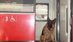 Cani e gatti sull'autobus: a Milano viaggeranno gratis. Cade l'obbligo di biglietto