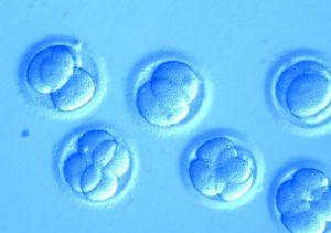 Embrione umano su chip per studiare i farmaci: è il primo