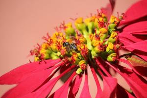 Le piante si estinguono a ritmo doppio degli animali