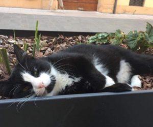 Nonantola (Modena), gatto Silvestro investito e ucciso da un vigile. Rivolta social