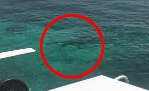 Bahamas, squali attaccano e divorano ragazza di 21 anni