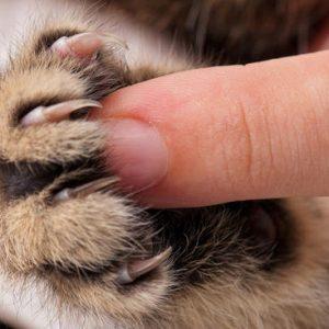 Gatti, vietato asportare le unghie: la proposta di legge a New York