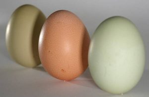 Uova sintetiche dalle piante (alghe, soia, semi di zucca): un mercato da un mld 1 $, aperta la corsa