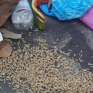 Rifiuti Roma, emergenza sanitaria: la Regione allerta le Asl, colonie di vermi sotto l'immondizia