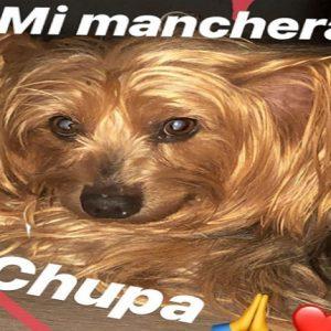 """Vittorio Brumotti, è morto il suo cagnolino Chupa: """"Ci mancherai"""" (foto Instagram)"""
