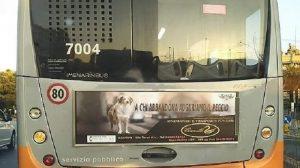 spot genova cani