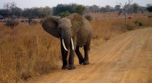 Namibia ucciso elefante