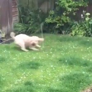 cane insegue la grandine a liverpool