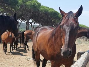 cavalli foto ansa
