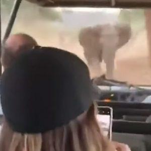 elefante attacca jeep