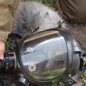 Tomsk (Russia), gatto salvato dall'incendio e rianimato con la maschera dell'ossigeno VIDEO