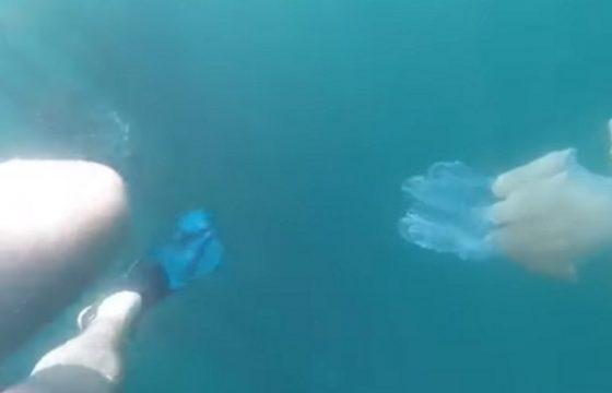 Medusa gigante in Cornovaglia