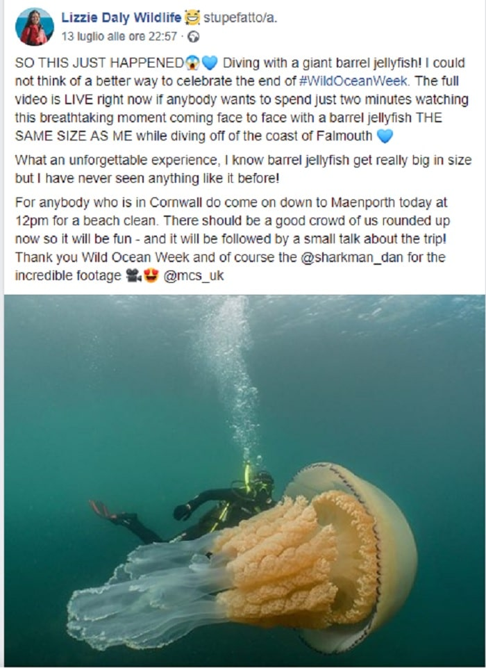 meduse giganti inghilterra