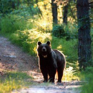 Forza Orso M49, mangiatene qualcuno. Dei nemici degli orsi e pure degli amici