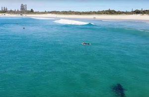 Australia, enorme squalo bianco si avvicina ai surfisti: il VIDEO del drone
