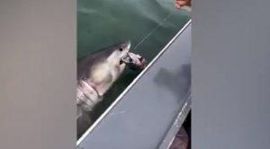 squalo bianco san francisco