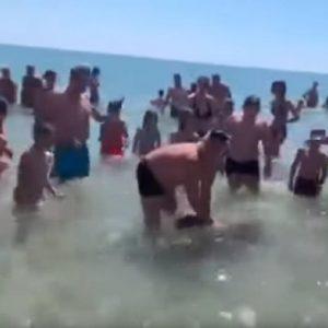 tartaruga Carretta caretta a Taranto